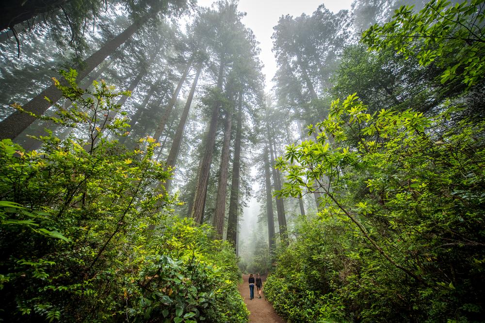 viaggio_in_USA_sequoia
