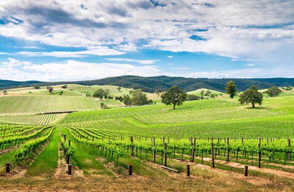 Alla scoperta del South Australia: vino e non solo