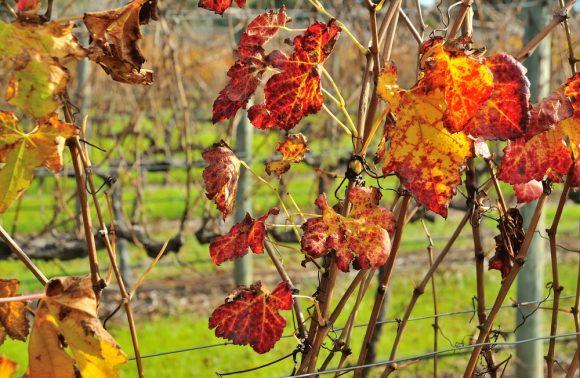 Un viaggio in Australia alla scoperta dei vini australiani