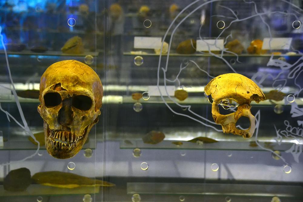 Patrimoni UNESCO del Sudafrica Culla dell'Umanità