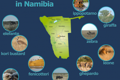 Safari Namibia: i 10 animali da cercare al Parco di Etosha
