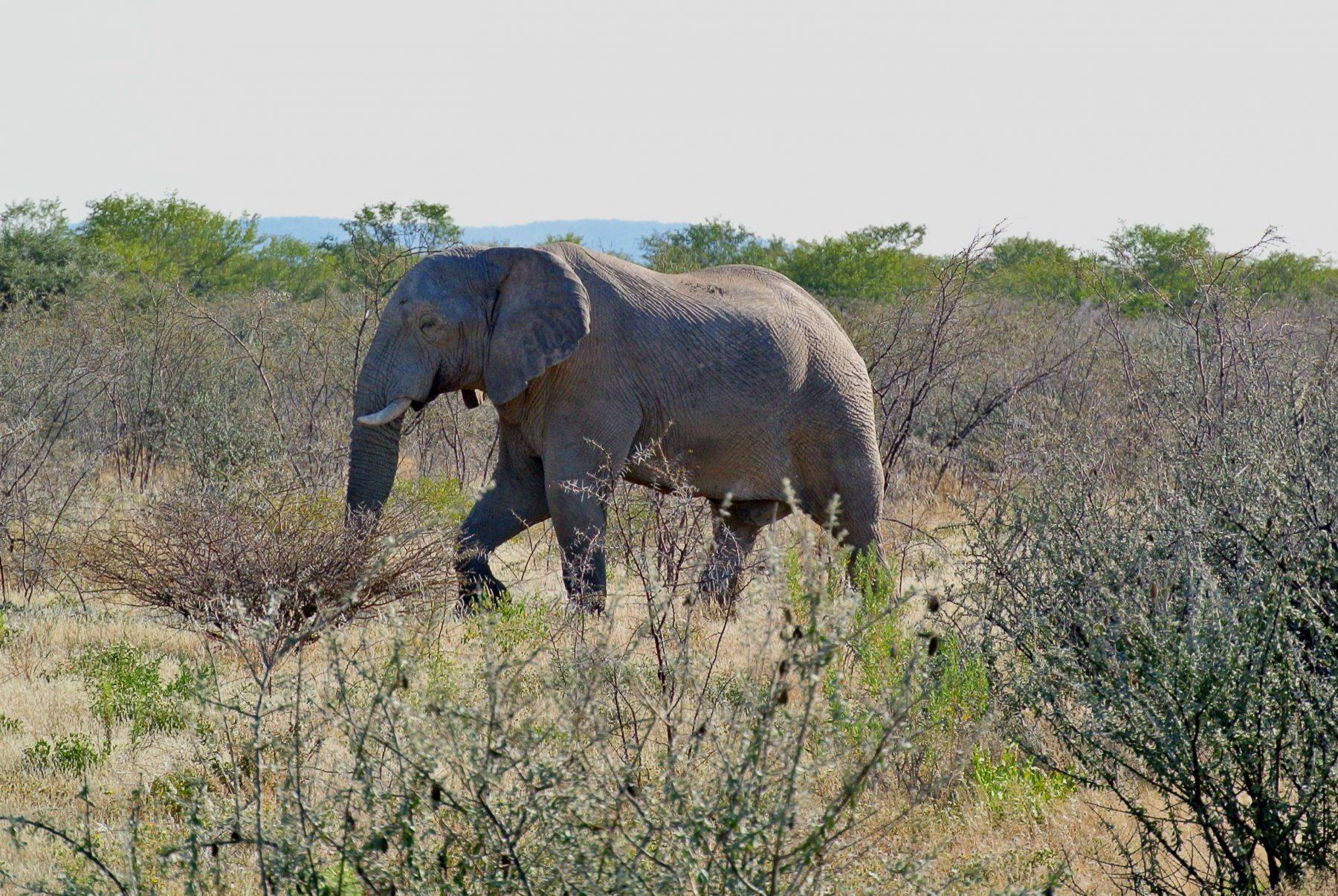 Safari Namibia Elefante