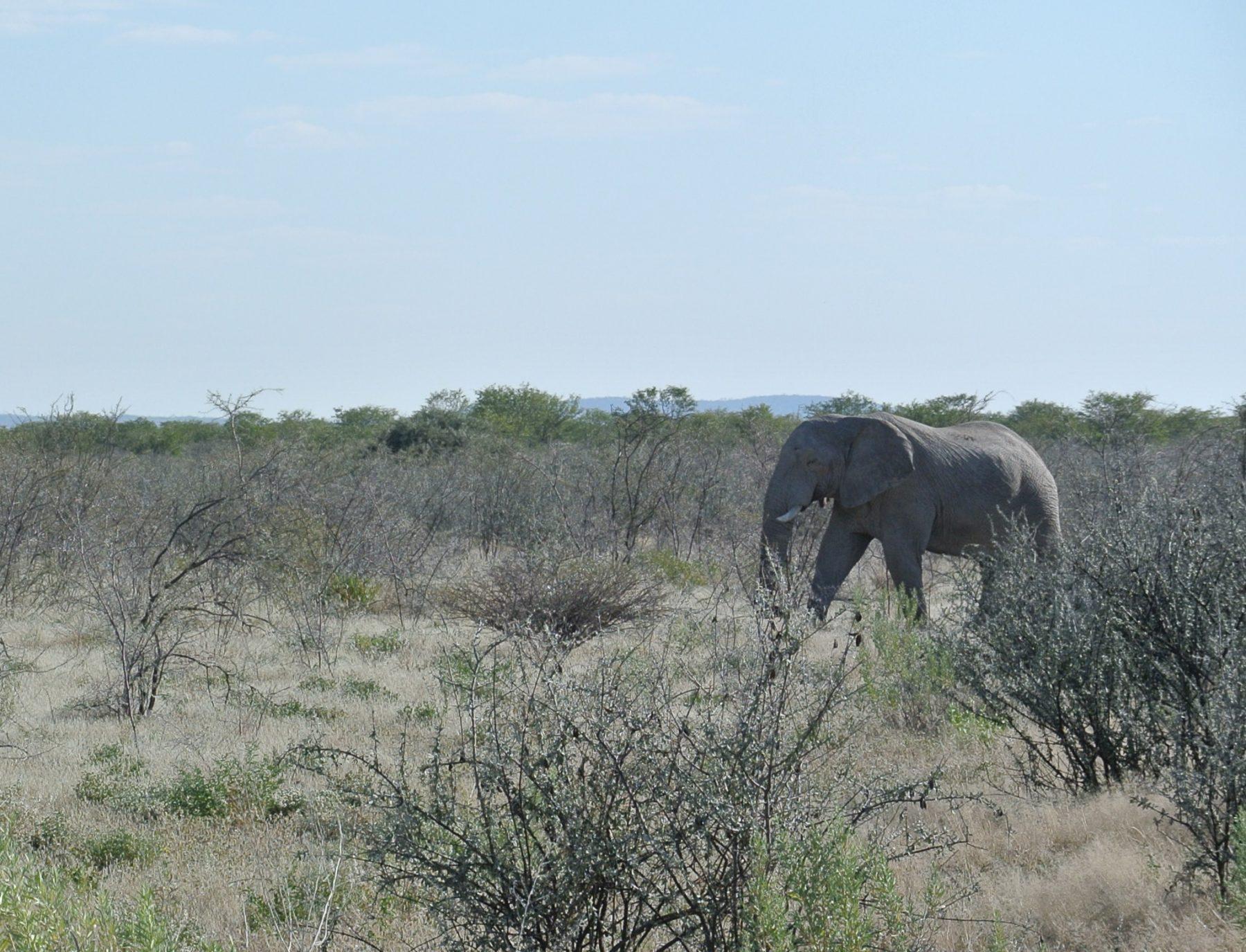 Safari Namibia Elefanti
