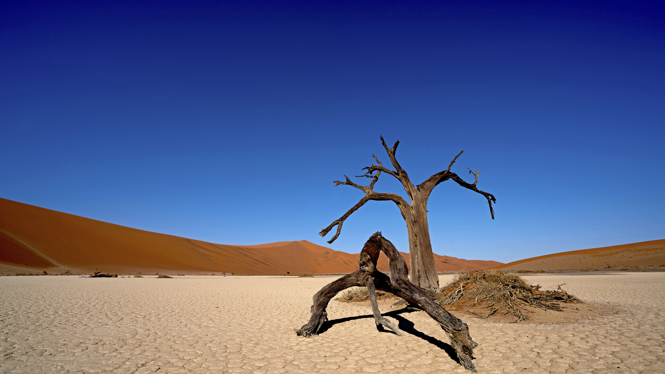 Hidden Vlei camel thorn trees in Sossusvlei, Namibia