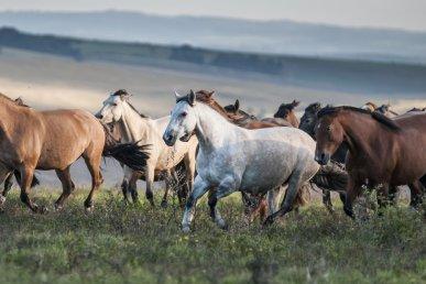 I cavalli Lavradeiros del Brasile