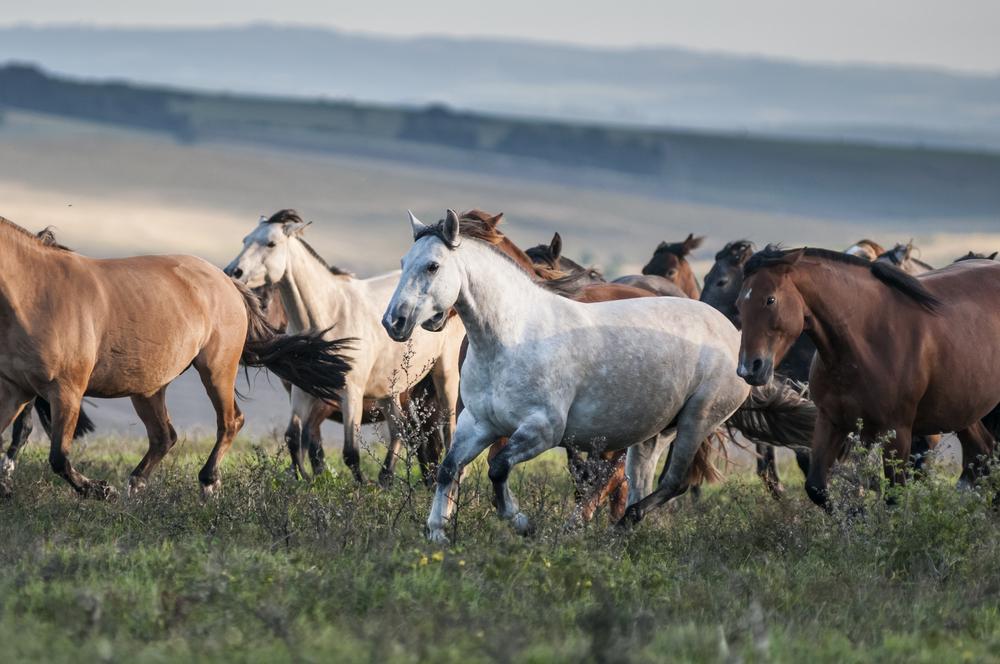 cavalli Lavradeiros