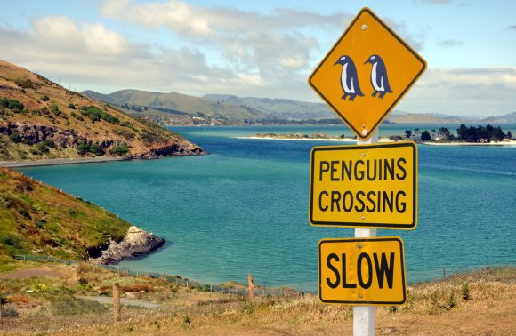 Nuova Zelanda: Tour individuale