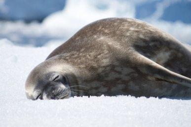 Crociera in Antartide e Circolo Polare
