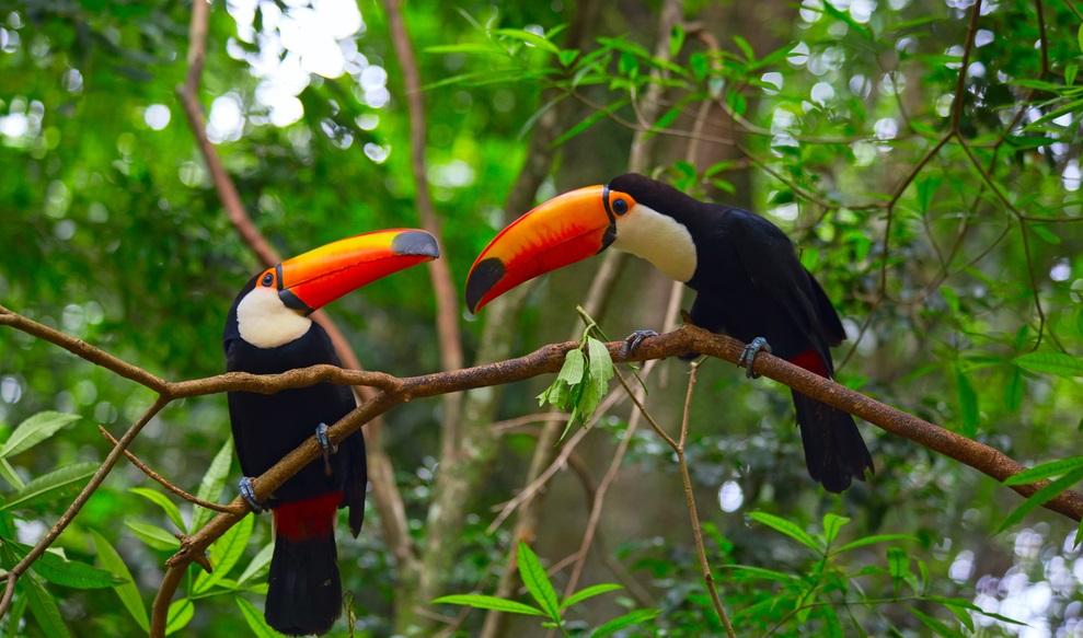 Viaggio tra i Patrimoni UNESCO dell'Argentina Iguazu tucani