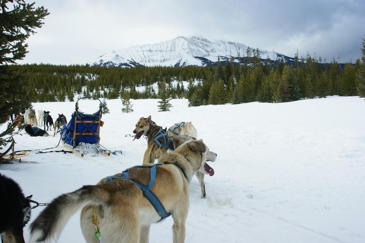 Viaggio nelle Rocky Mountains invernali dog sledding