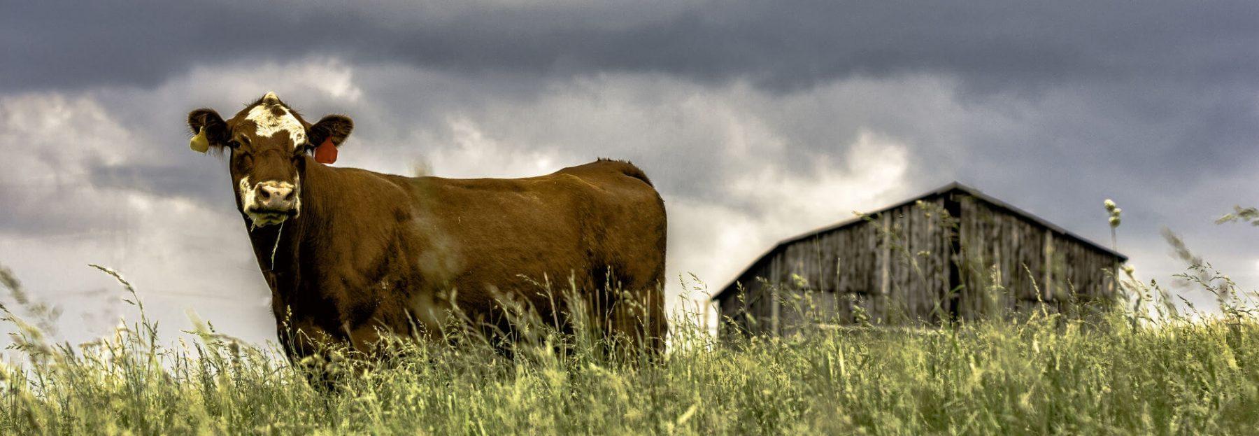 Farm Tennessee