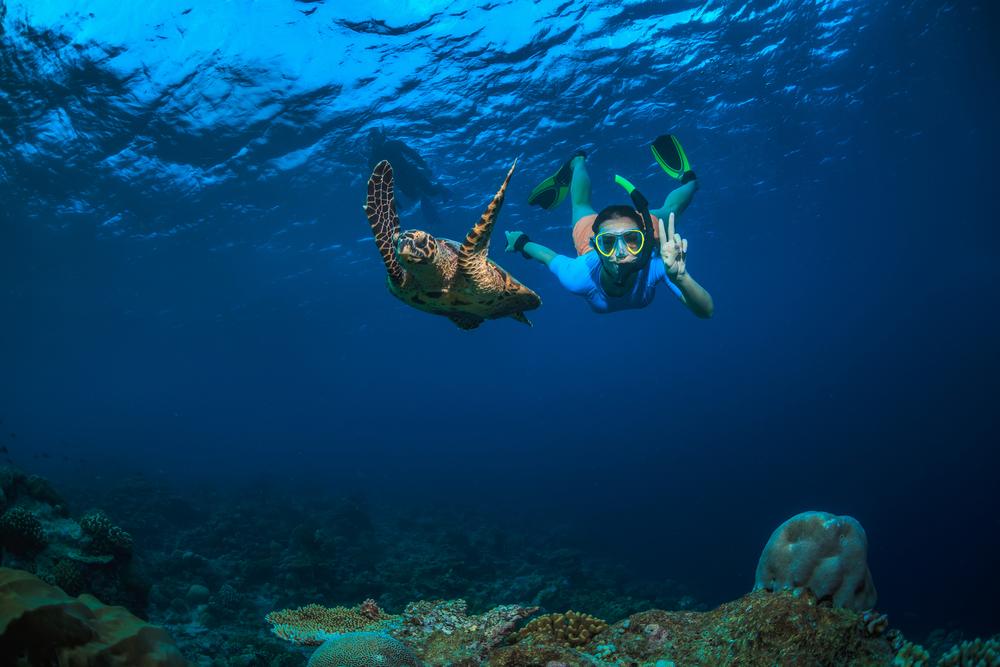 Viaggio Seychelles tartaruga