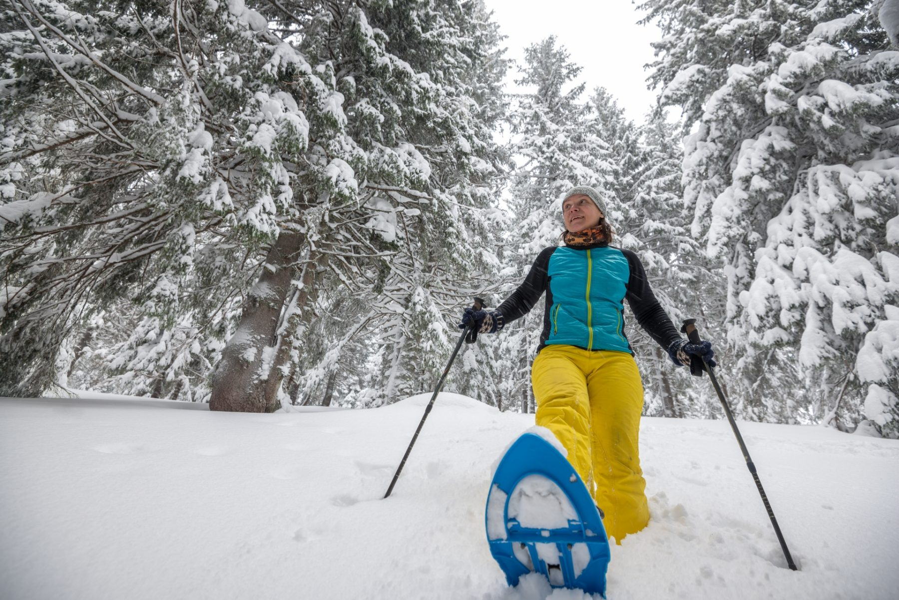 Viaggio nelle Rocky Mountains invernali Ciaspole