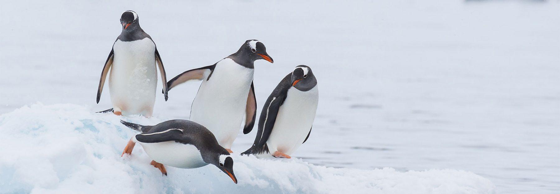 Viaggio in Antartide pinguini