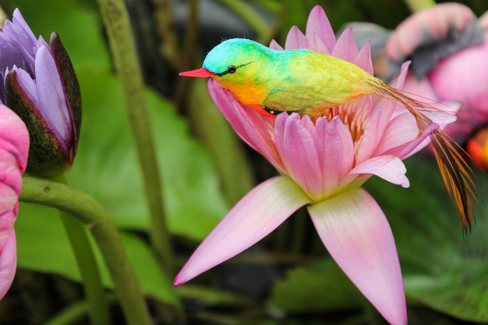 viaggio Seychelles uccello
