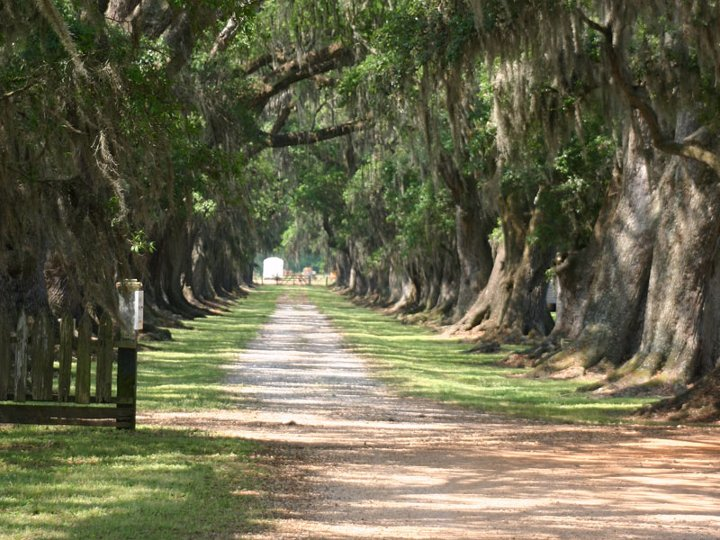 Piantagioni della Louisiana Evergreen Plantation