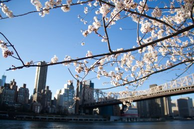 Primavera a New York