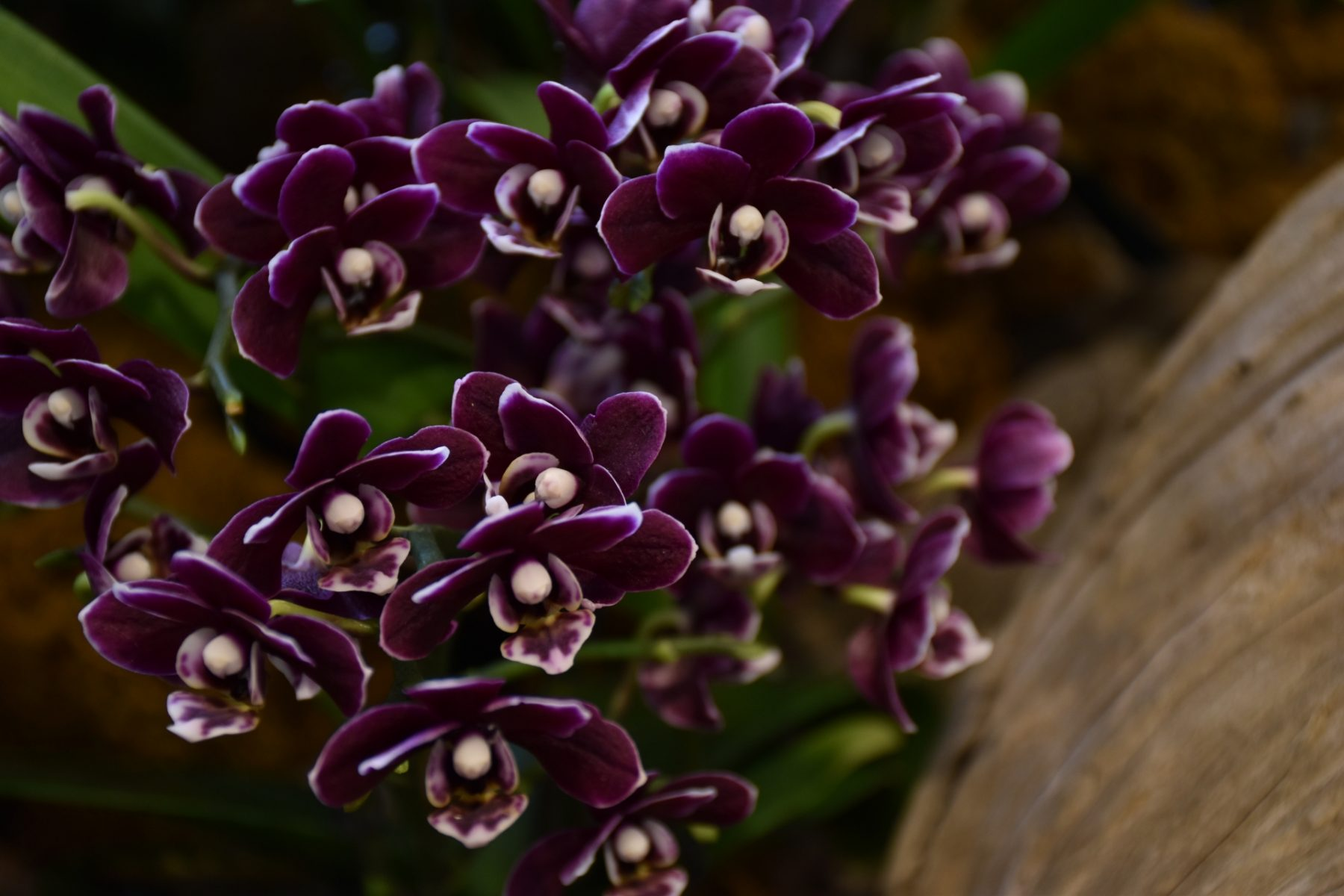 Cosa fare a New York in Primavera Orchid Show