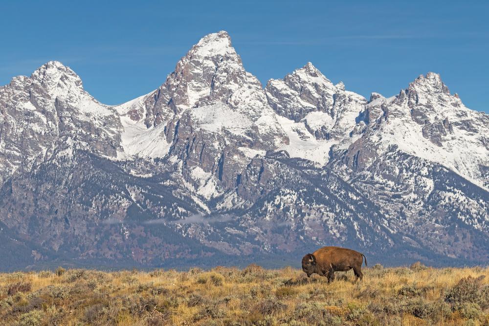 Icone western in Wyoming e Montana Buffalo