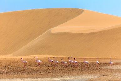 Viaggio di nozze Namibia