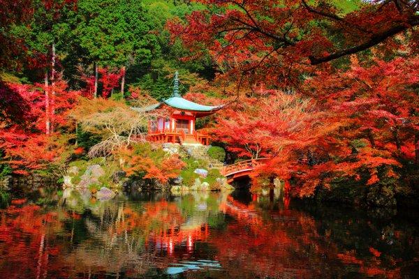 I foliage più spettacolari del mondo Giappone Kyoto 1I foliage più spettacolari del mondo Giappone Kyoto 1