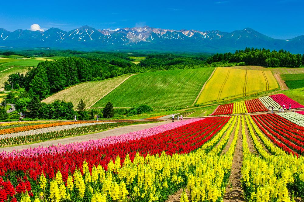 Hokkaido cosa vedere 4