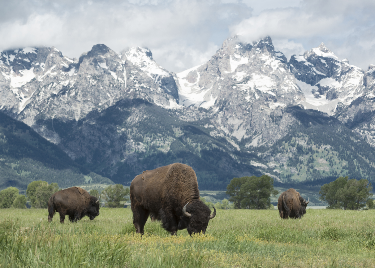 I big five delle Rocky Mountains