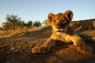 Sudafrica e Mozambico, safari e spiagge